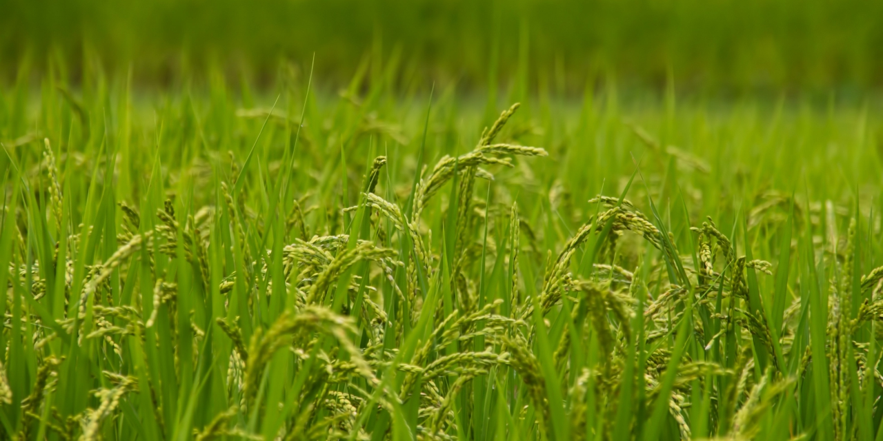 Agrochemical Market Continues to Shrink