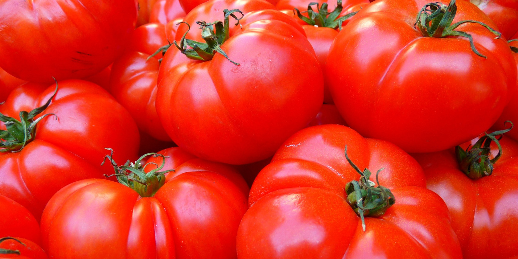 Osaka Prefecture University Uses Special Film to Increase Lycopene in Tomatoes