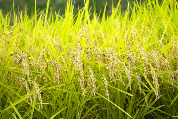Sustainable Agriculture Set for Growth in Japan – Part 2