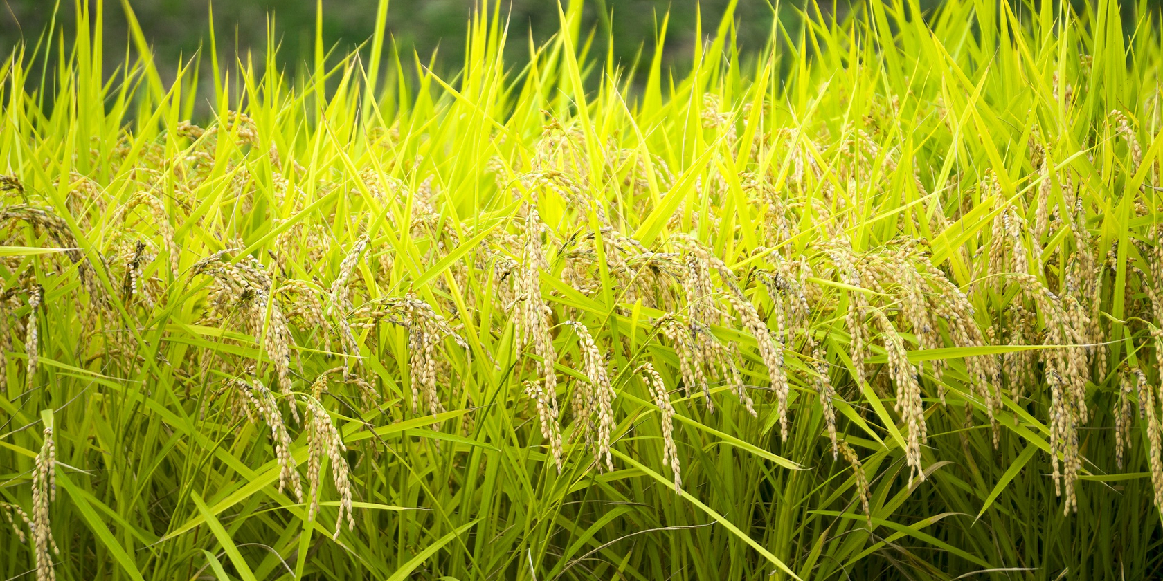 sustainable agriculture set for growth in japan � part 2