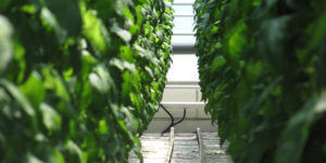 JXTG Looks to Strengthen Agricultural Operations