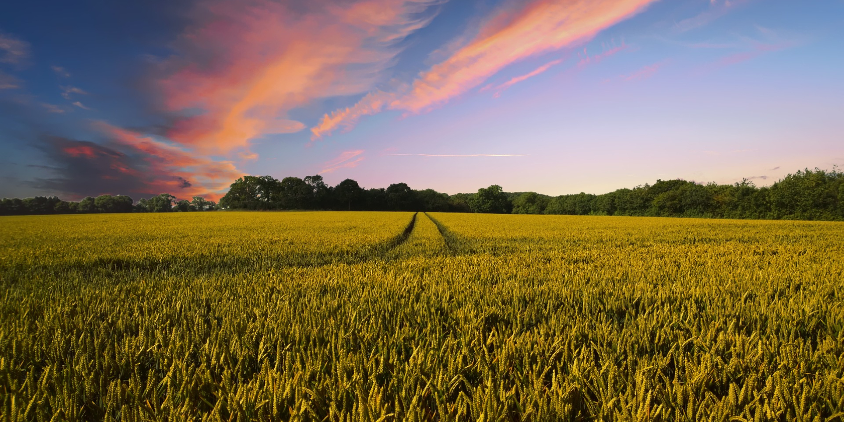 ISK Accelerates Market Development for Agrochemicals in Asia