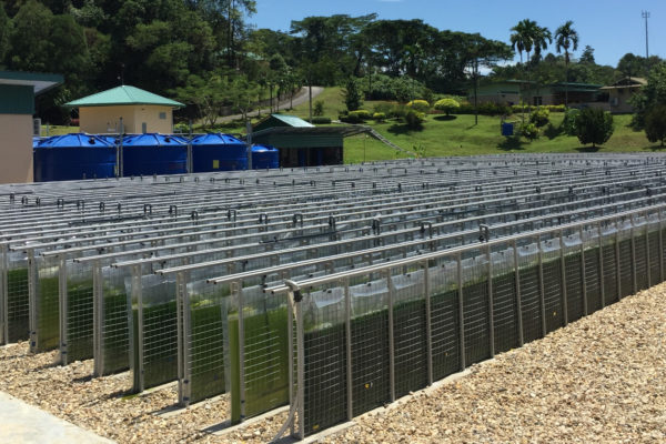 Companies Pursue Commercialization of Algae Biomass