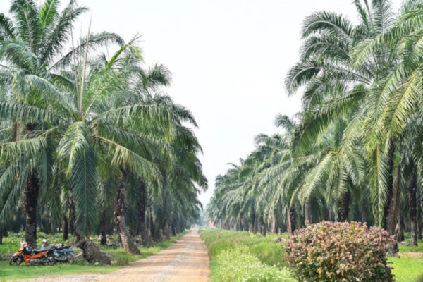 Evonik to Expand Use of RSPO-Certified Palm Oil in Pursuit of Greener Cosmetic Ingredients